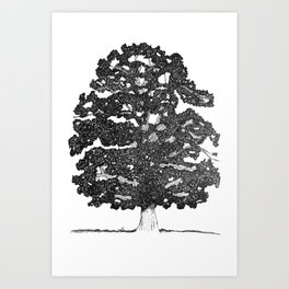 Chestnut Tree Art Print