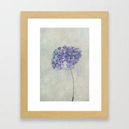 Beautiful Blue Hydrangea Framed Art Print