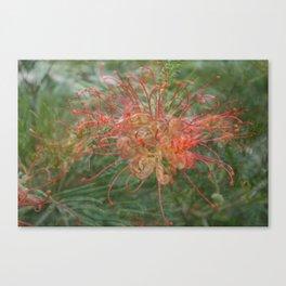 Australian Natives Photo shopped Canvas Print