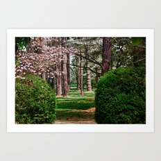 Pathway to the Woods Art Print