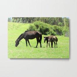 Horses in a Pasture Metal Print