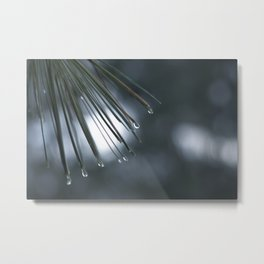 Water drops dripping from pine needles Metal Print