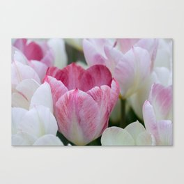 Tulips In White And Pink Canvas Print