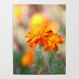 Marigolds In The Fall Poster