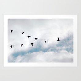 """""""Flock"""" Bird Art by Murray Bolesta Art Print"""