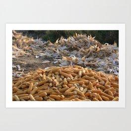 Sweet Corn and Husks Art Print