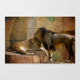 Lion Kisses Canvas Print