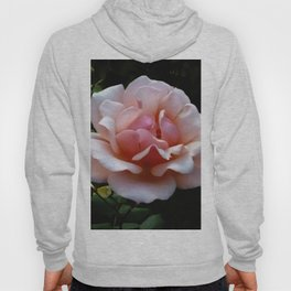 Pale Pink Rose Flower Close-up Hoody