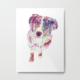 Multicolored Australian Shepherd red merle herding dog Metal Print