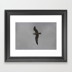 Full Flight Framed Art Print