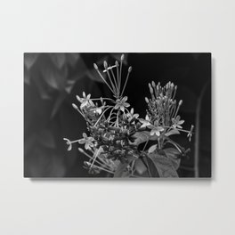 Black and White Flowers in the Dominican Republic Metal Print