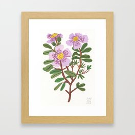 Flower Study 1 Framed Art Print