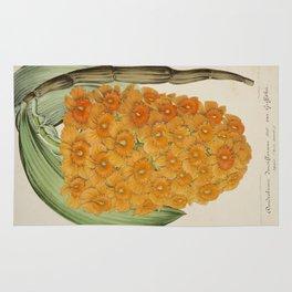 Dendrobium Densiflorum Vintage Botanical Floral Flower Plant Scientific Illustration Rug