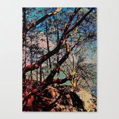 Arbutus Trees, Stoney Hill Sunset Canvas Print