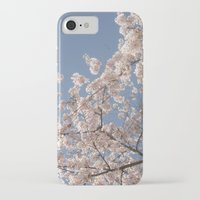cherry blossoms iPhone & iPod Cases featuring  Cherry Blossoms  by cescabear