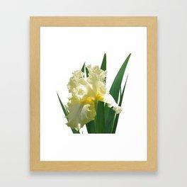 Iris 'Elegant Impressions' Framed Art Print