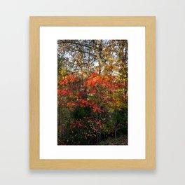 Autumn Colors Along the Natchez Trace Framed Art Print