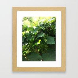 Green grapes Nature Design Framed Art Print