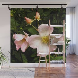 The Sally Holmes Single Rose Wall Mural