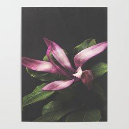 Magnolia Portrait Poster