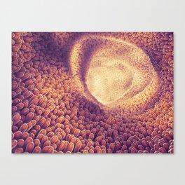 Intestines Canvas Print