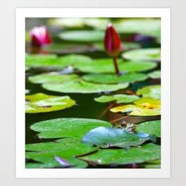 Pond with frog Art Print