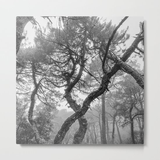 """X"". Forest dreams BW Metal Print"