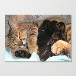 Mother Tabby Cat Suckling Four Newborn Kittens Canvas Print