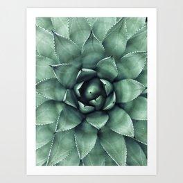 Macro Succulent Art Print