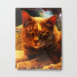 cat in bazaar Metal Print