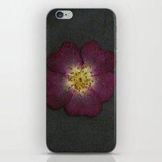 Pressed Wild Rose iPhone & iPod Skin