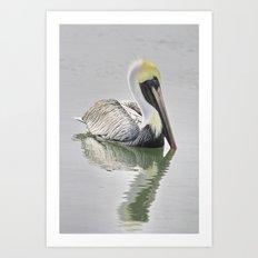 Reflective Pelican Art Print