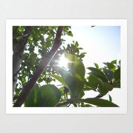 Sun Burst Art Print