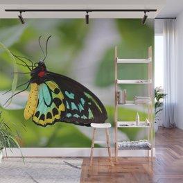 Goliath Birdwing Wall Mural