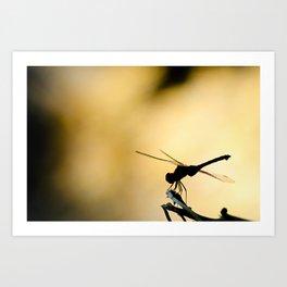 Dragonfly silhouette Art Print