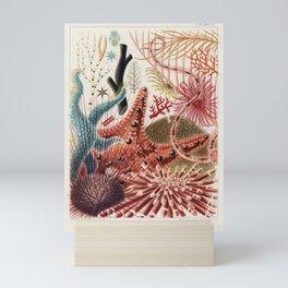Vintage Barrier Reef Marine Life Illustration Mini Art Print