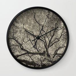 The old oak tree Wall Clock