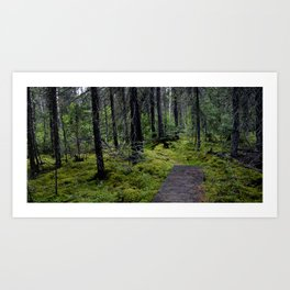 Tranquil Forest.  Art Print