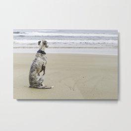 A whippet on a beach Metal Print