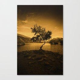 Tree at Llyn Padarn Canvas Print