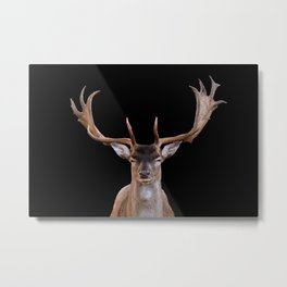 Big Reindeer Head - black background Metal Print