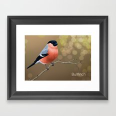 Bullfinch Framed Art Print