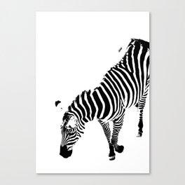A Zebra in Black and White Canvas Print