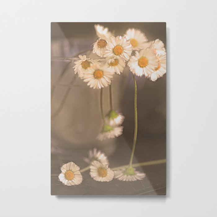 Vintage daisies 2 Metal Print