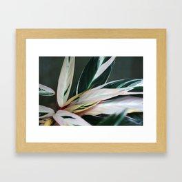 tropic of palm 6382 Framed Art Print