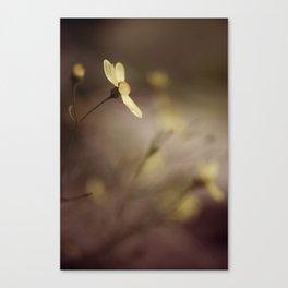 Coreopsis Canvas Print