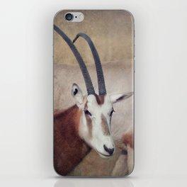 Scimitar oryx iPhone Skin
