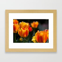 Tulips in the Garden Framed Art Print