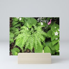 Maidenhair Fern, Adiantum Pedatum, And Friends Mini Art Print
