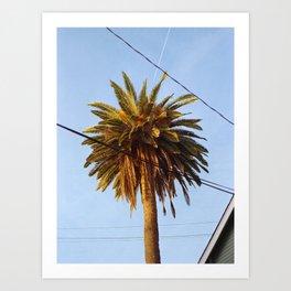 Venice Palm Art Print